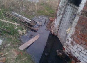 По вине коммунальщиков в селе Песчаное происходит экологическая катастрофа — местные жители бьют тревогу