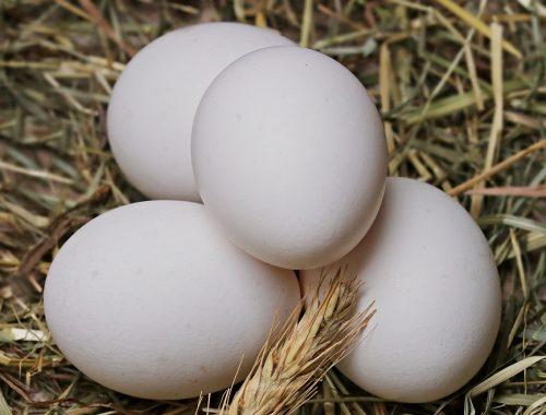 Сократить производство яиц из-за убытков грозят производители. Это может вызвать дефицит