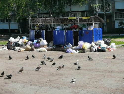 Подготовились на славу: через полмесяца после старта мусорной реформы выяснилось, что в ЕАО не хватает 813 контейнерных площадок