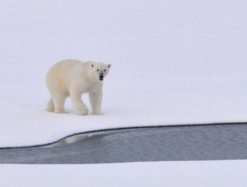 Вслед за «Дальневосточным гектаром» в Минвостокразвития придумали Арктический