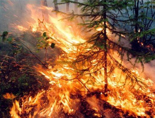 В России по-прежнему горят сотни тысяч гектаров леса