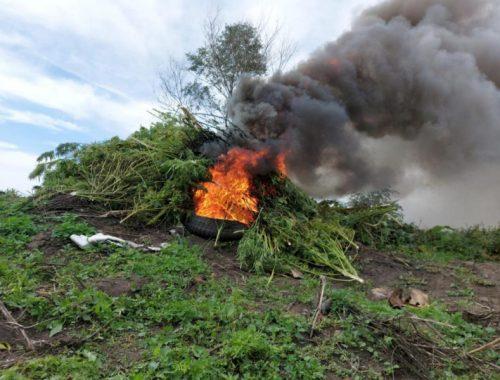 Жгут на покрышках кусты конопли: полицейские ЕАО проводят рейды по уничтожению дурман-травы