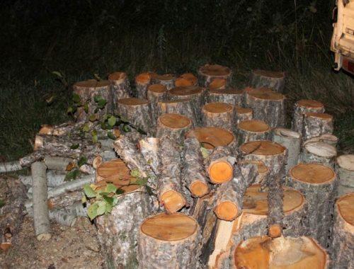 Участковые уполномоченные полиции задержали чёрных лесорубов в селе Дубовое